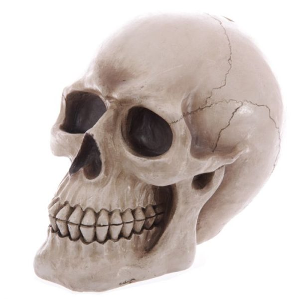 Life size human skull money box